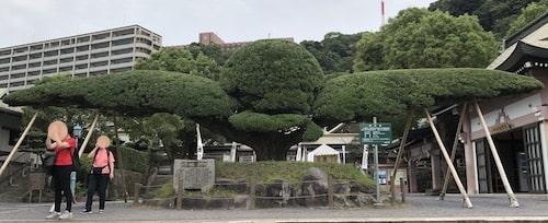 照国神社【鹿児島】御朱印