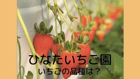 宮崎 ひなたいちご園
