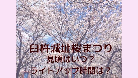 臼杵城址桜まつり2020見頃はいつ?ライトアップ時間は?