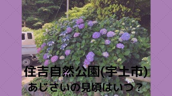 住吉自然公園(宇土市)あじさいの見頃はいつ?混雑状況は?〜神社への行き方も!