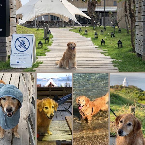 【アイランドナガサキ】バークロッジに宿泊した口コミ体験談!愛犬は楽しめた?